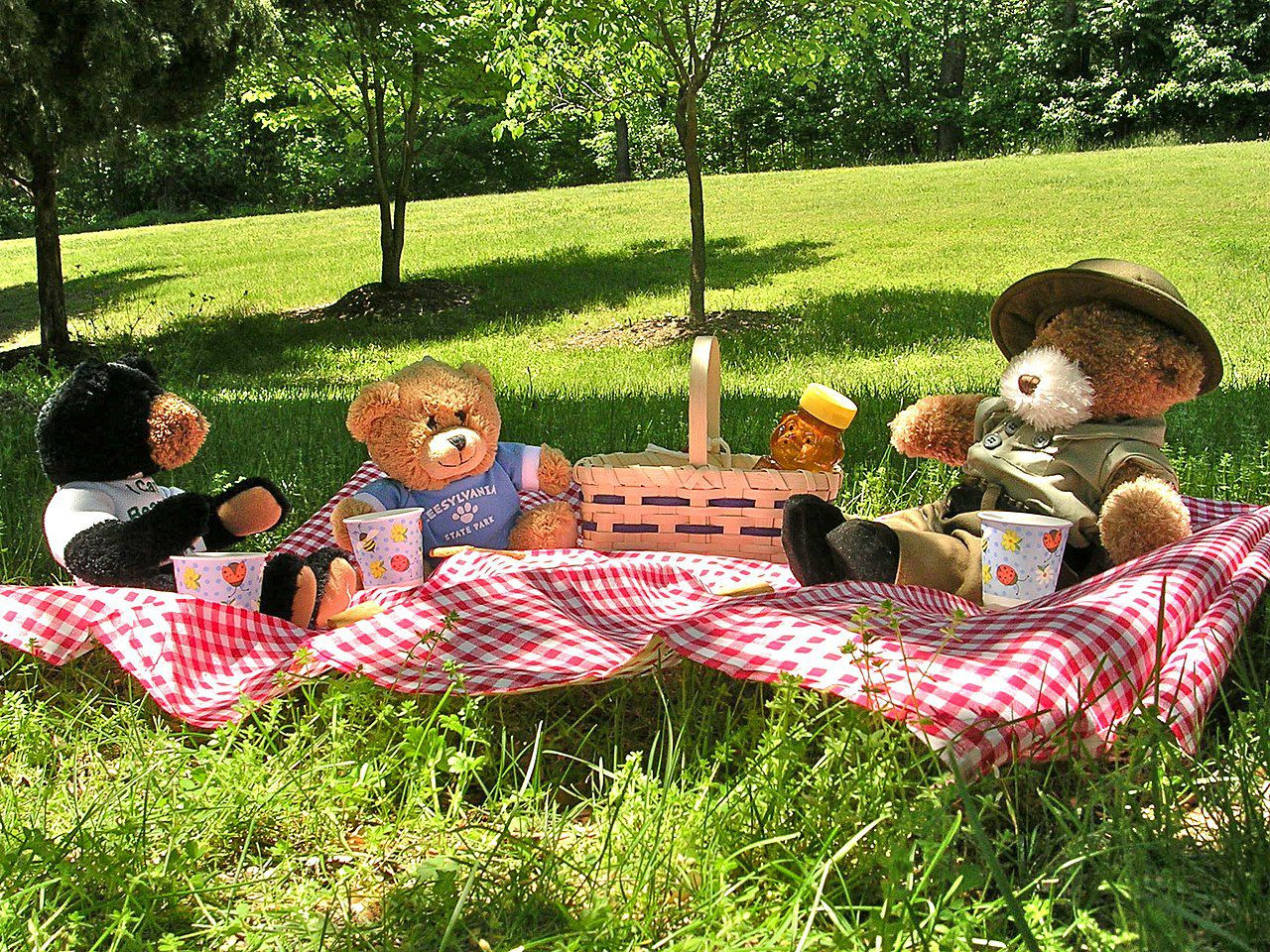 Picnic Time for Everyone