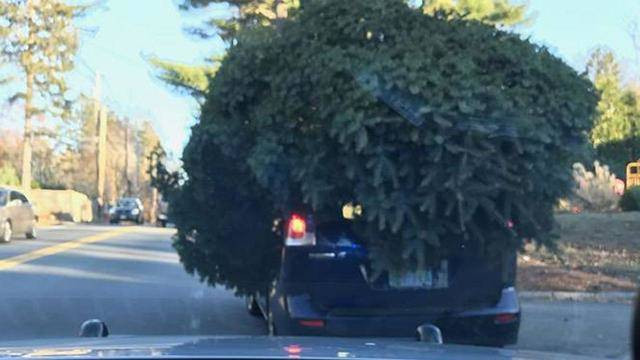 10 Tips For Transporting A Christmas Tree On Your Car Torque Tips